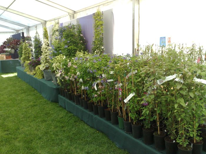 Clematis Display plus Clematis sales area