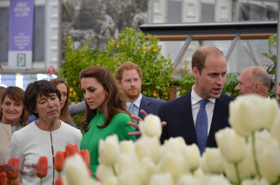 Harry William and kate just opposite our clematis display