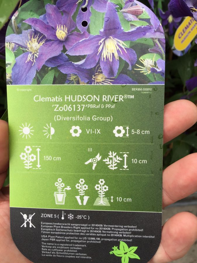 Clematis Hudson River label