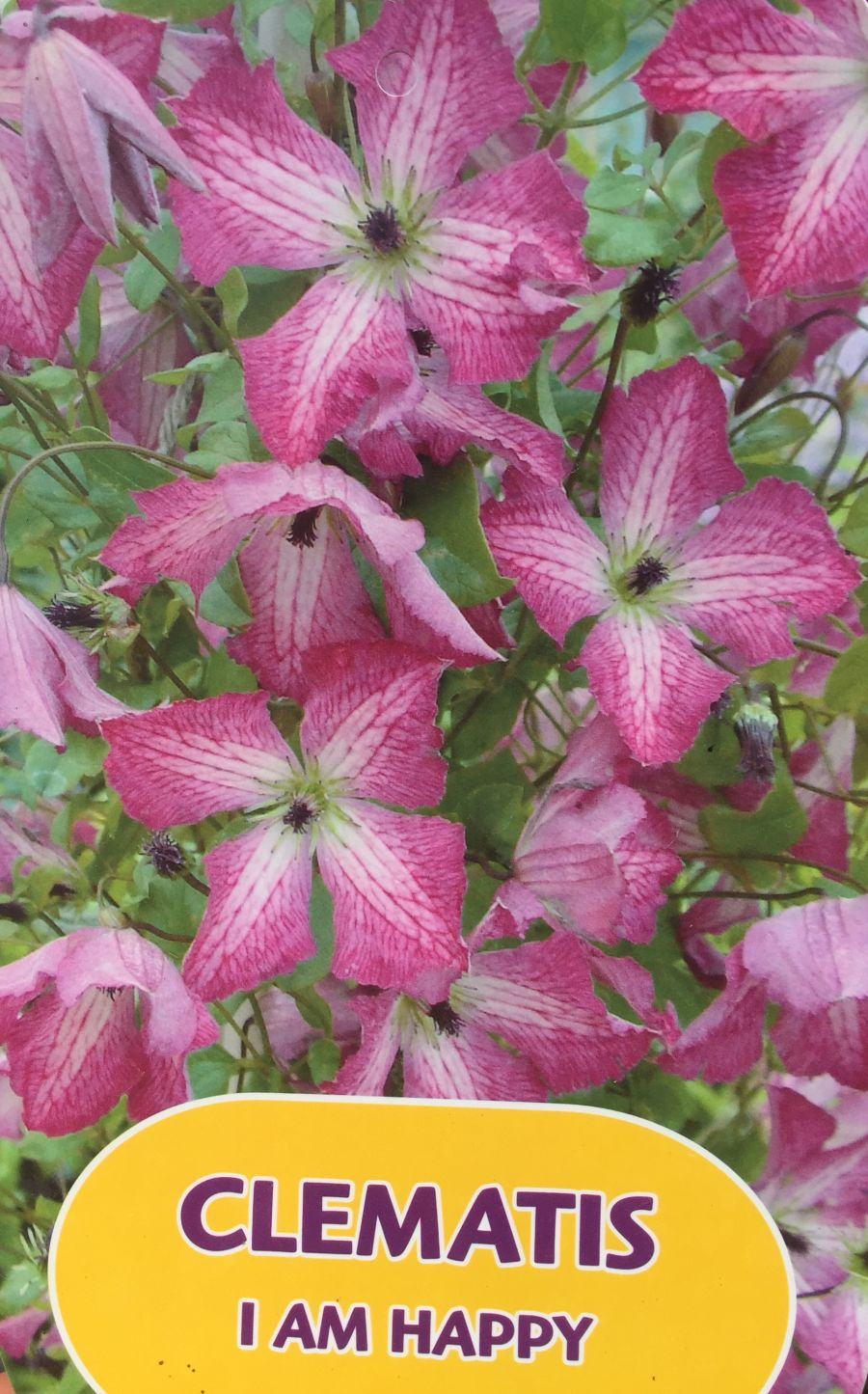 clematis I am Happy label