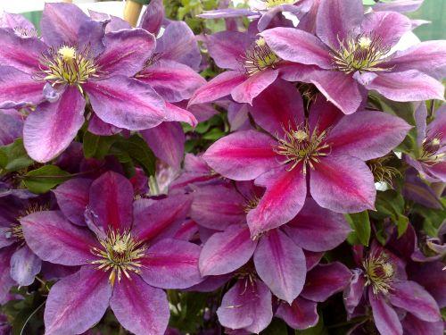 Temptation has masses of flowers