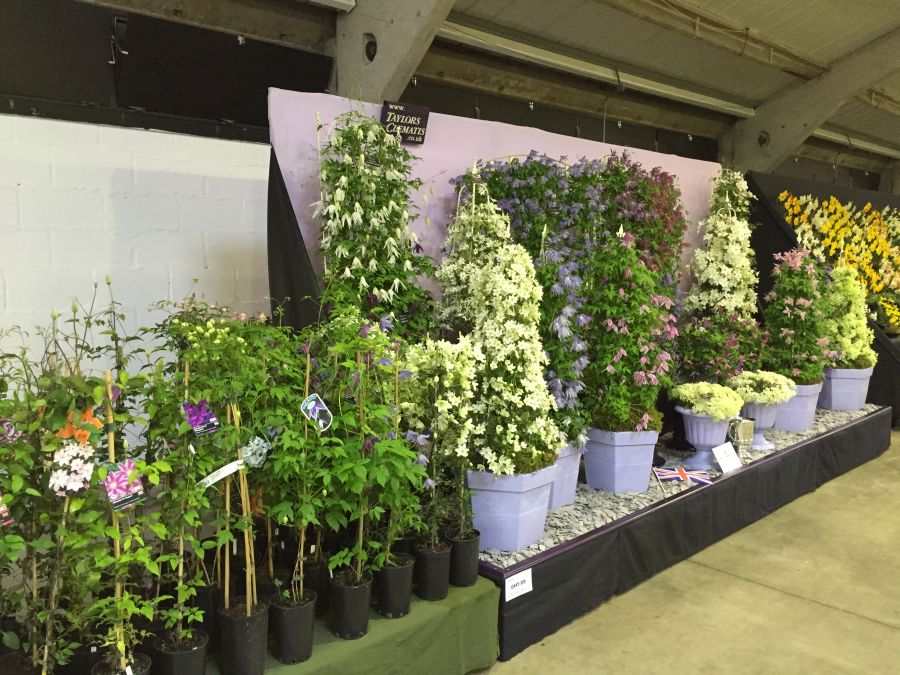 Taylors Clematis Harrogate display 2015 and sales area