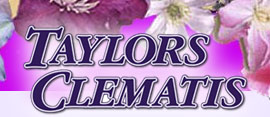 Taylors Clematis