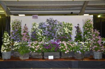  Harrogate Autumn Show Sept 2011