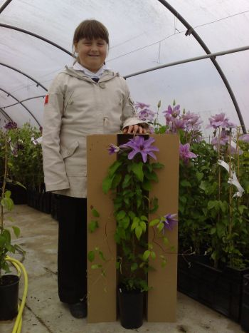 Taylors Clematis:  Size of Clematis plants we grow