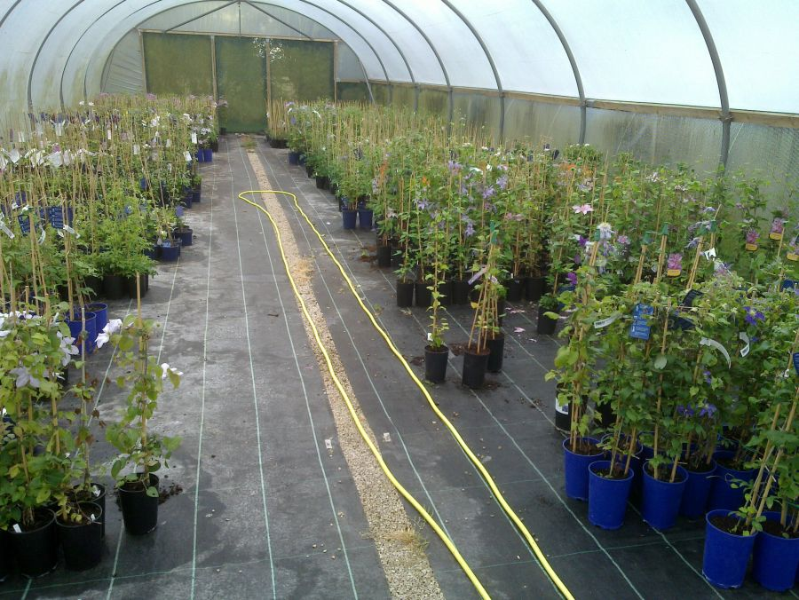 One of our Growing Tunnels