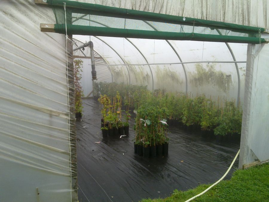 Another One of our Growing Tunnels being watered from overhead