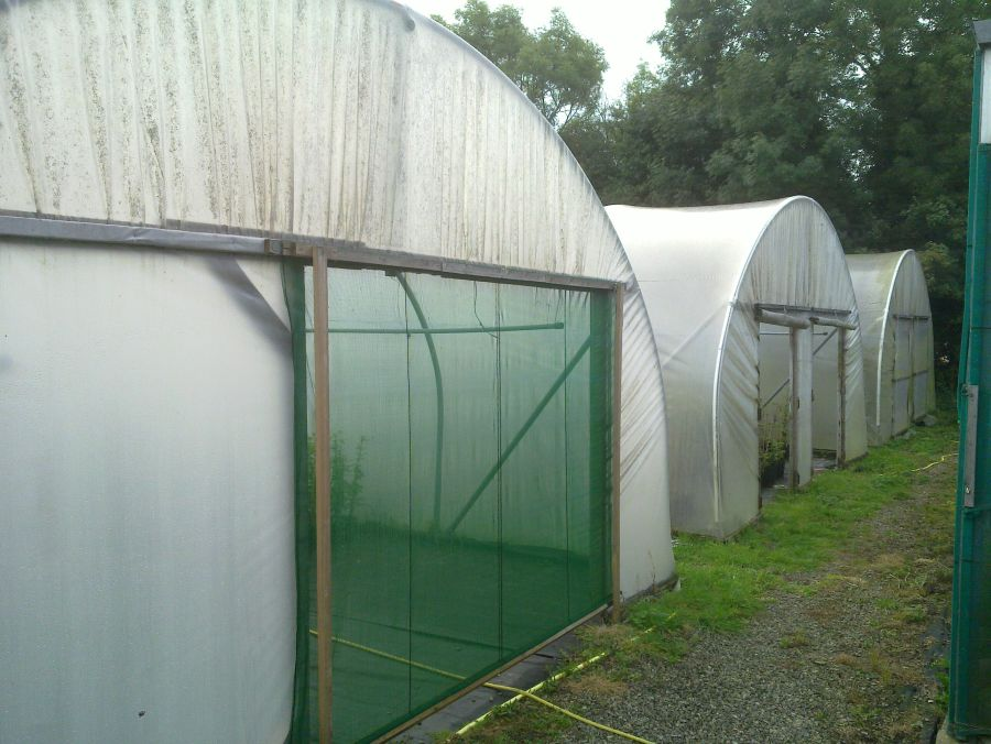 side of top greenhouse