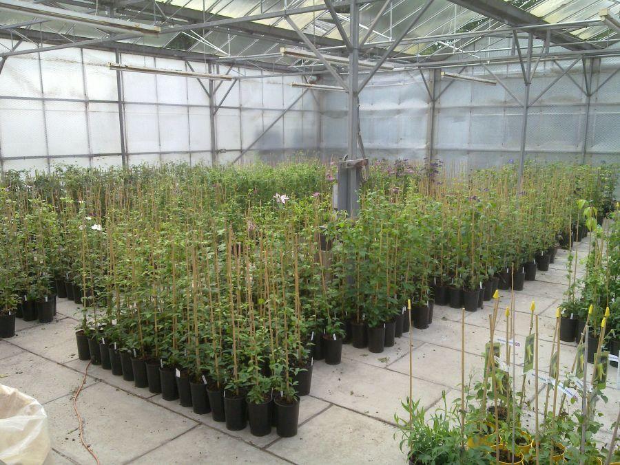 Top Greenhouse inside