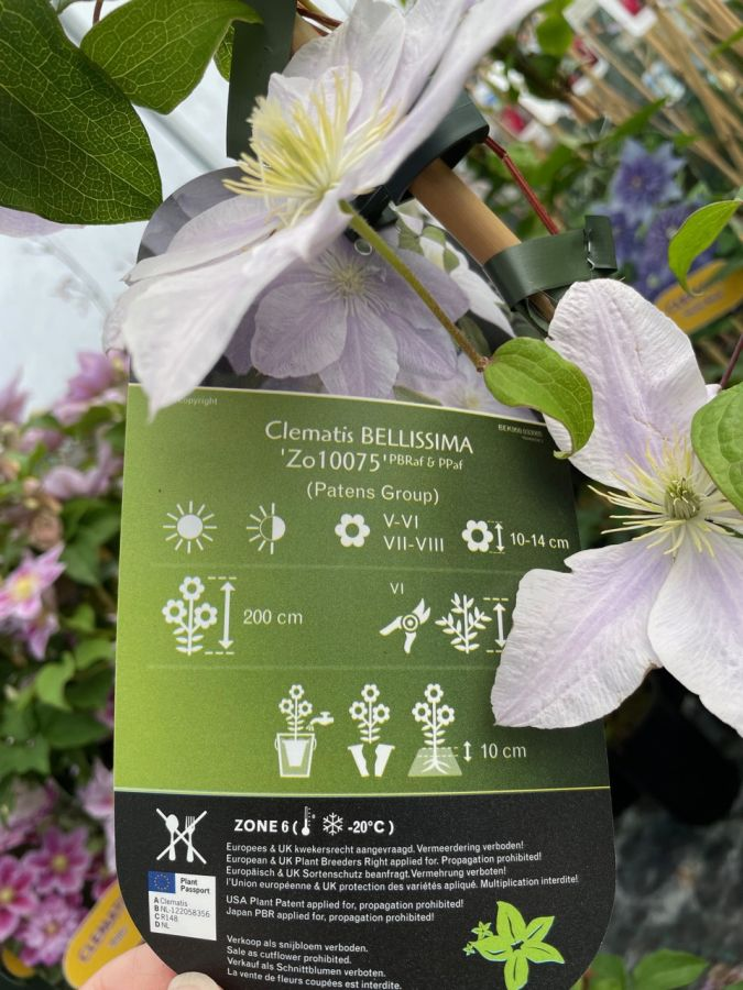 Clematis Bellissima back of label