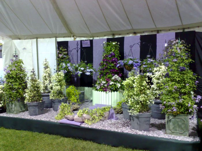 Note the Hanging baskets clematis ( boulevard collection)