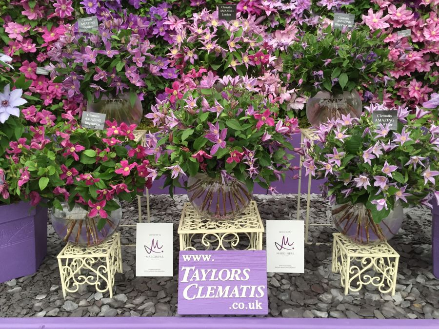 Clematis Blue Pirouette amongst other cut flower at chelsea