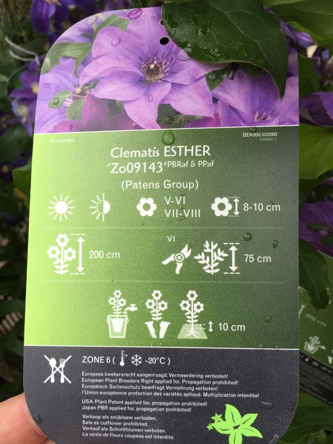 Clematis Esther label card