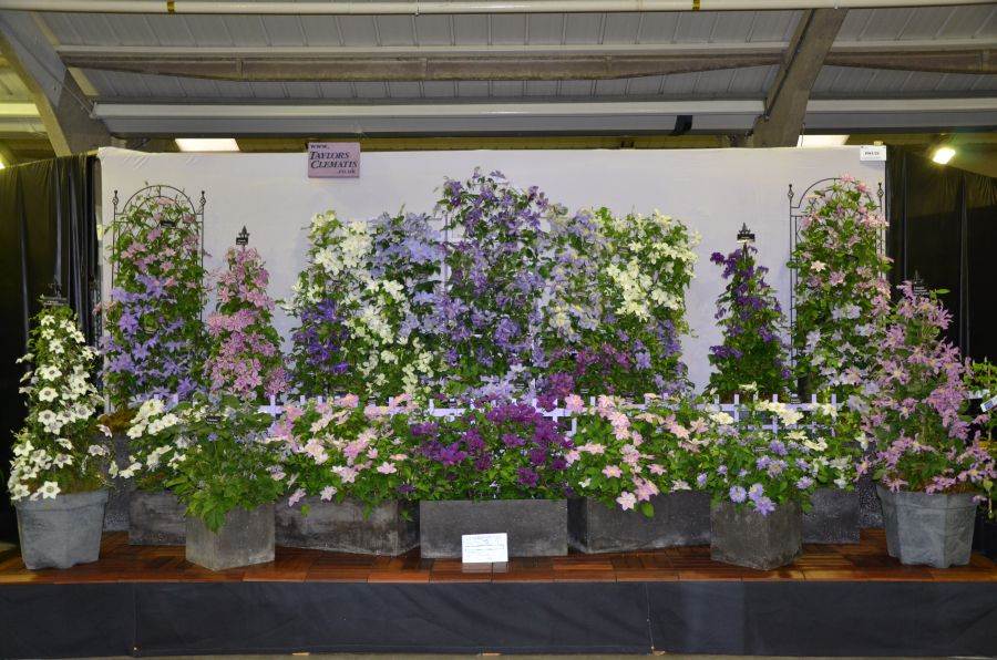 Harrogate Gold Medal Display Sept '11