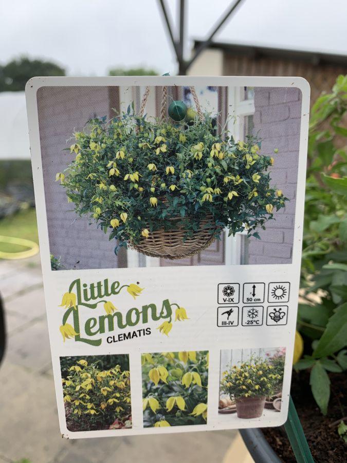 Clematis Little Lemons label front