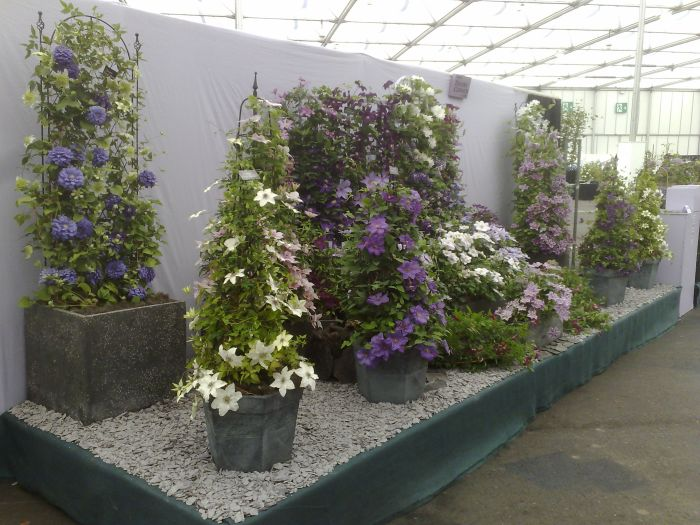 Our Clematis display at Gardeners World Live NEC