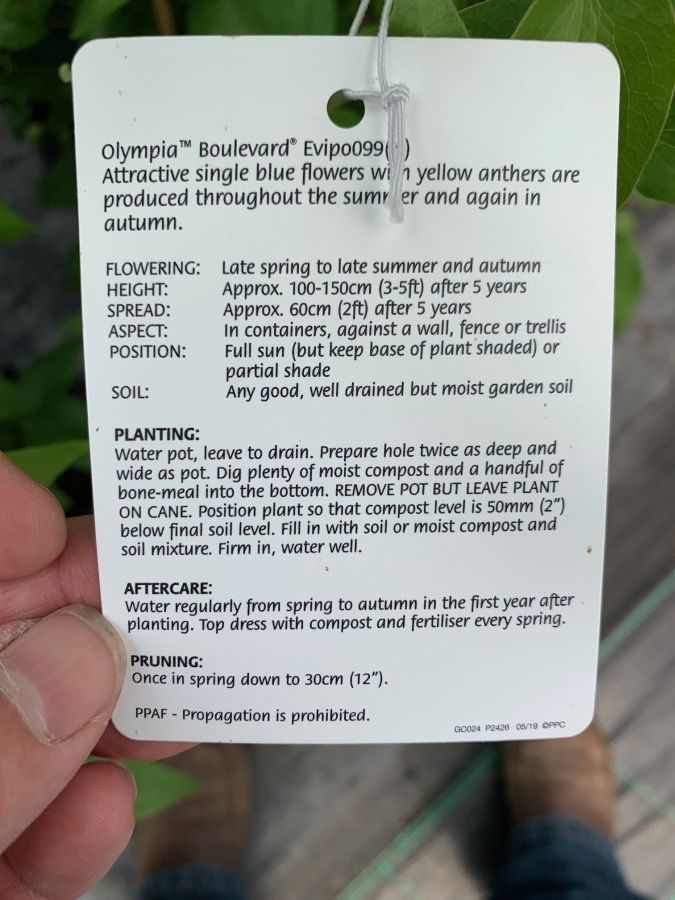 Clematis Olympia name card (back)
