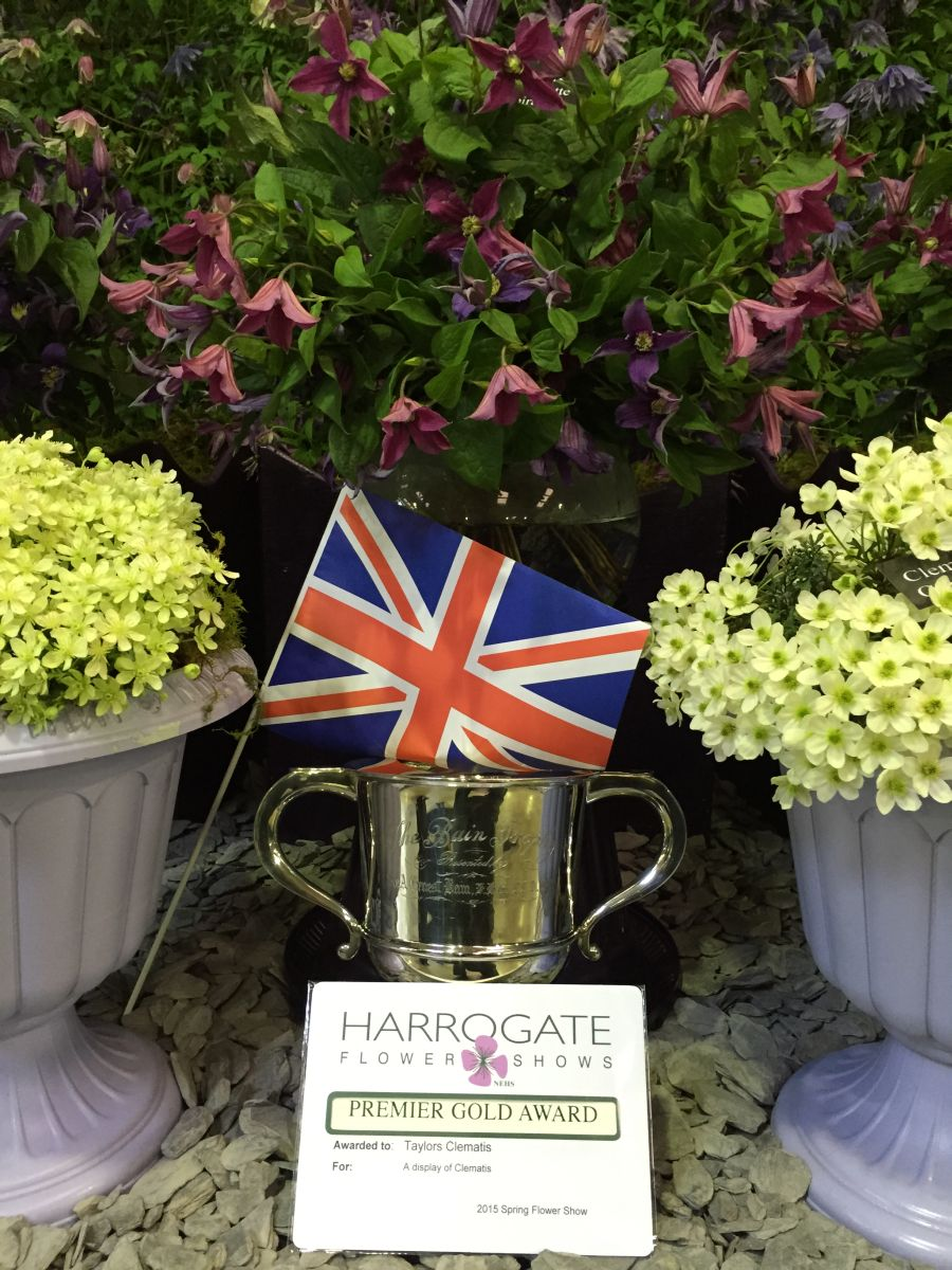 Taylors Clematis Harrogate display 2015 the cup