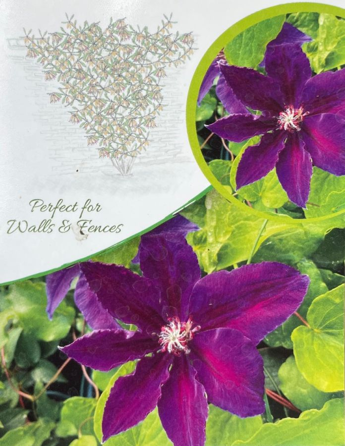 clematis Wildfire label
