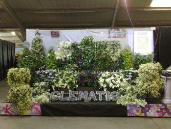 Taylors Clematis:  Harrogate Spring Flowershow 2008
