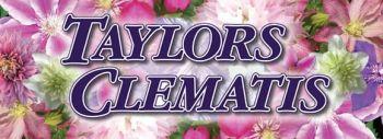 Taylors Clematis:  taylors logo